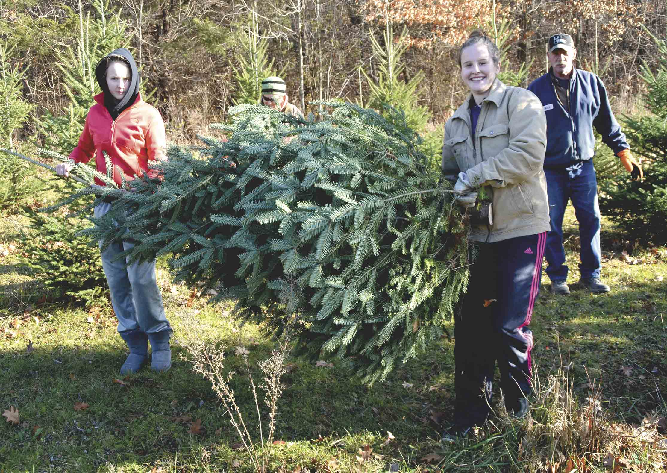 In family tradition, (front, l-r) Tessa and Macy Halverson help their grandparents (back, l-r) Pam and Mark Halverson pick out a Christmas tree every year. This year, the group decided to get their tree from the Volga Valley Christmas Tree Farm in rural Fayette. Chris DeBack photos...